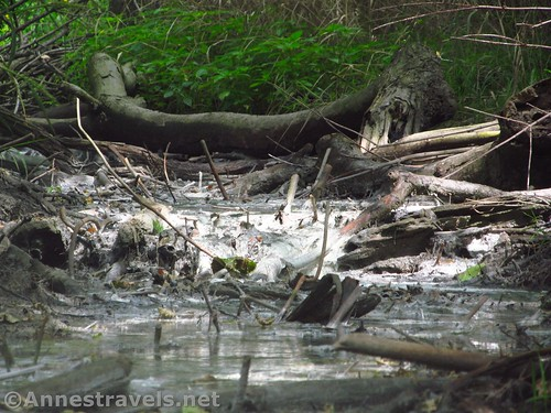 The sulfur stream - notice how all of the sticks and creekbed are white - along Black Creek near Rochester, New York