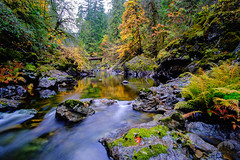 Island Autumn