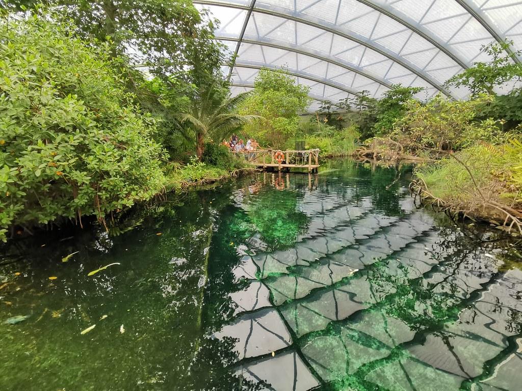 Überdacht: 3000 Quadratmeter groß ist Burgers' Mangrove, erschaffen in Anlehnung an ein vom Zoo unterstütztes Naturgebiet im mittelamerikanischen Staat Belize.