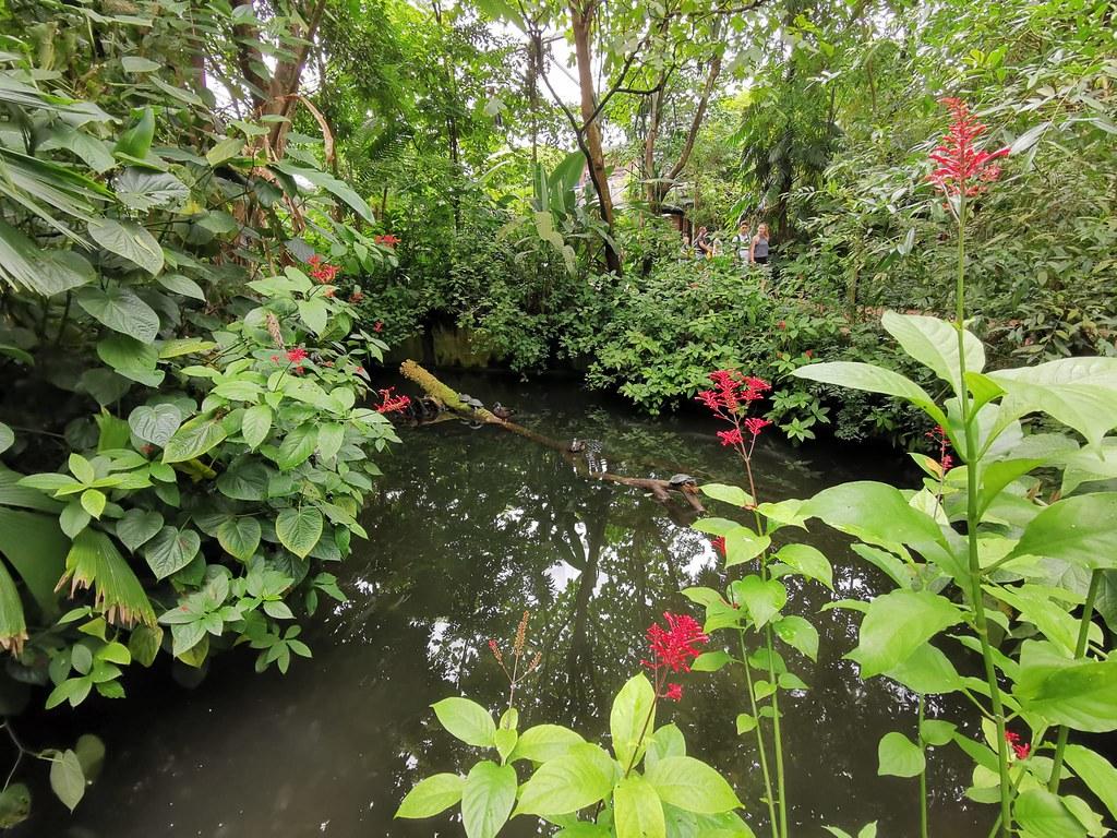 Indoor: 3000 Quadratmeter groß ist Burgers' Mangrove, erschaffen in Anlehnung an ein vom Zoo unterstütztes Naturgebiet im mittelamerikanischen Staat Belize.
