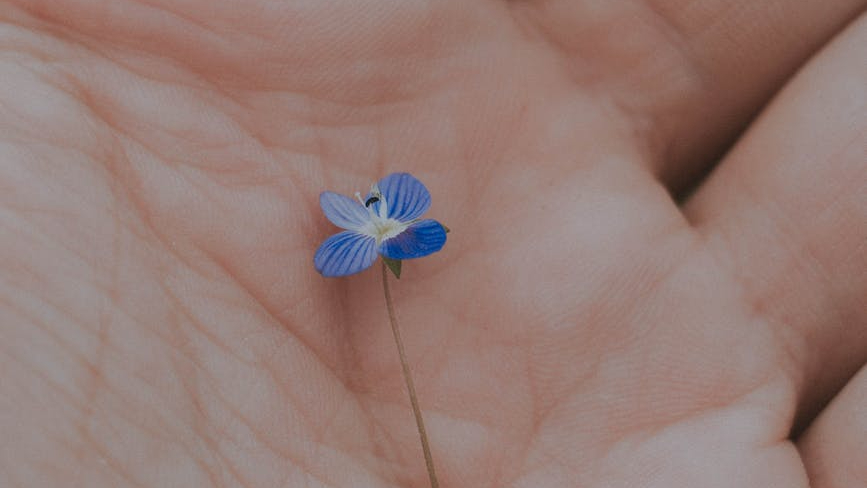 A forget me not lying in the palm of a hand
