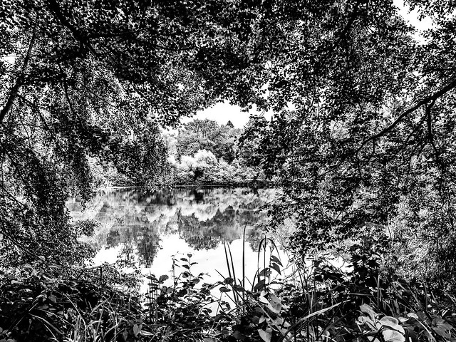 Blick über den Pröckelmoor Teich