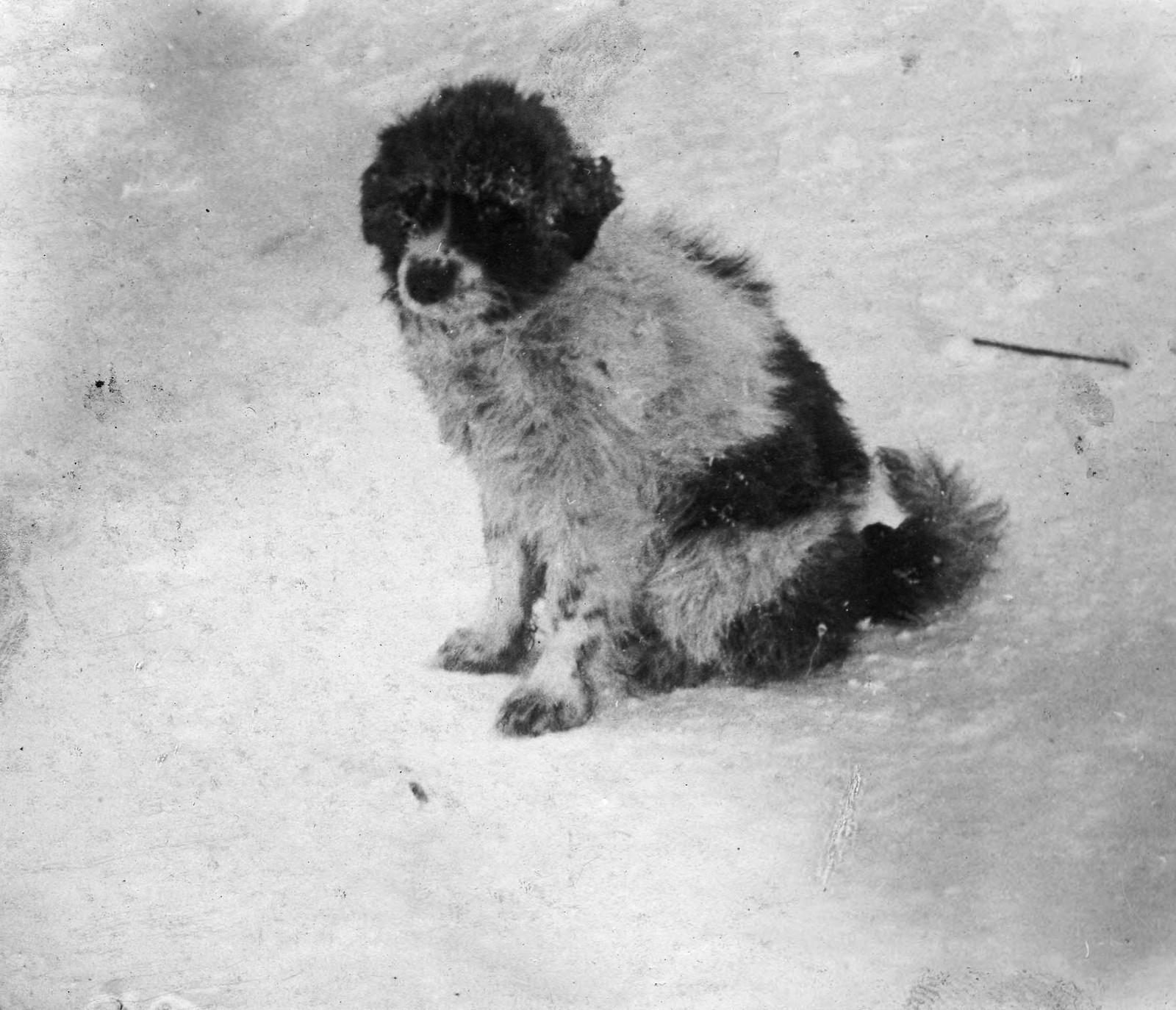 09. Ездовая собака