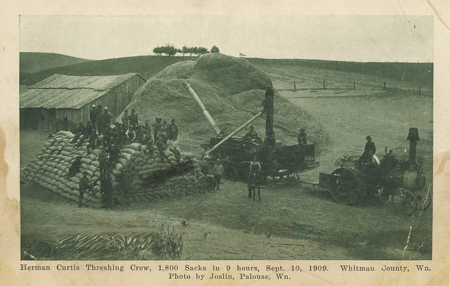 Herman Curtis Threshing Crew, September 10, 1909 - Whitman County, Washington
