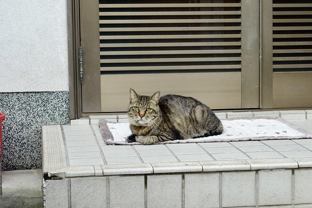 Today's Cat@2021−09−02