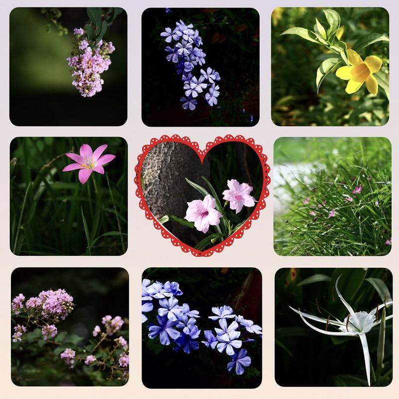 夏天開的花