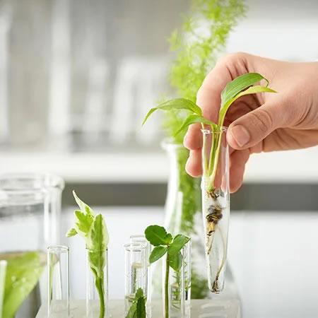 plantas-suplemento-alimenticio