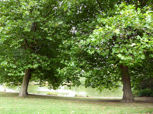Between Two Trees