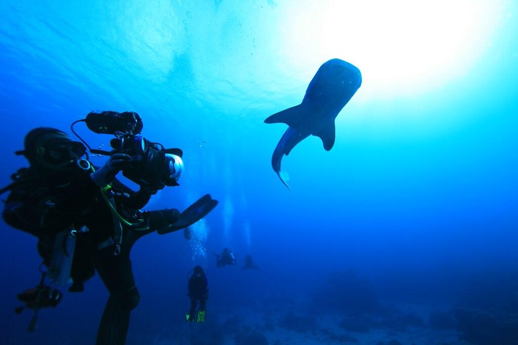 《餘生.共游》 記錄海洋中最大的魚類——鯨鯊的故事。