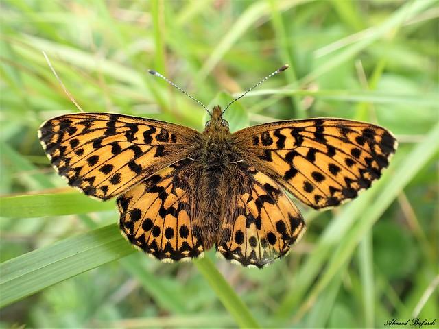 Butterfly 2048