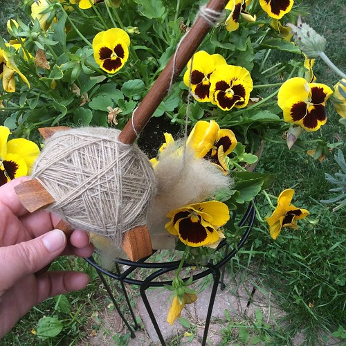 A cross-arm spindle in butternut wood by Ray Thomson has a full cop of handspun Coopworth wool naturally dyed in a light khaki colour by irieknit.  She holds the spindle in her left hand in front of potted yellow pansies on a plant stand.