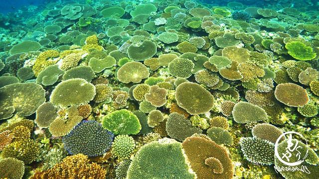 珊瑚が元気で嬉しい