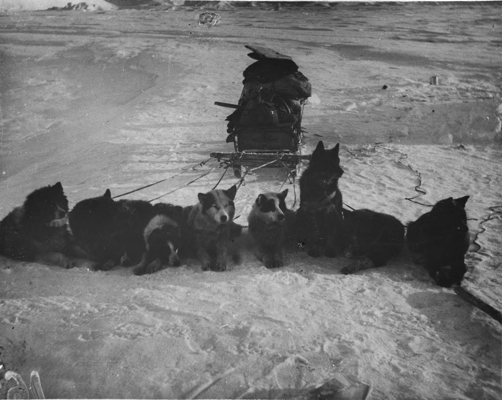 14. Упряжные собаки перед дорогой