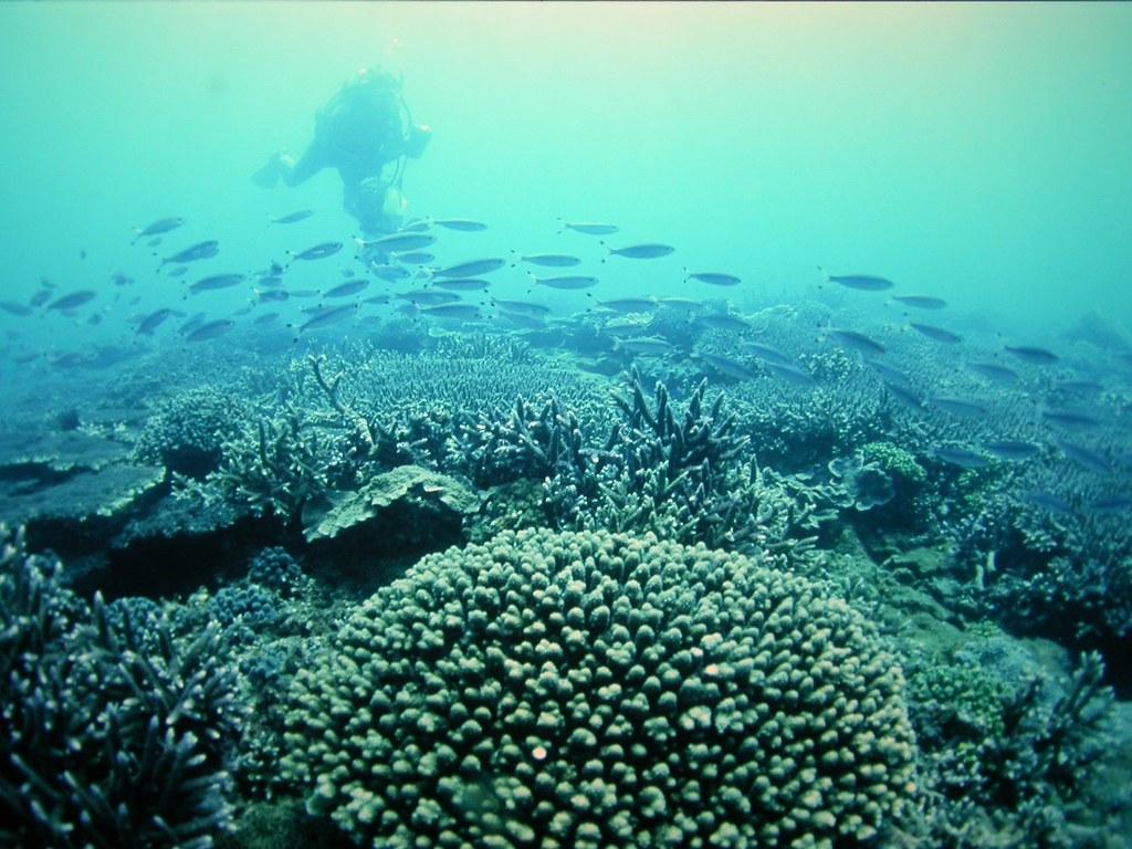 《記憶珊瑚》反省人類的過漁現象,並批判對珊瑚資源的不當利用。