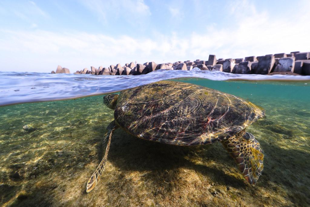 《平安龜》透過人與龜的故事,反問我們是否能給海龜一個「平安歸」的環境?