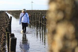 《退潮》記錄彰化西南角海域、最後一片完整的泥灘地。