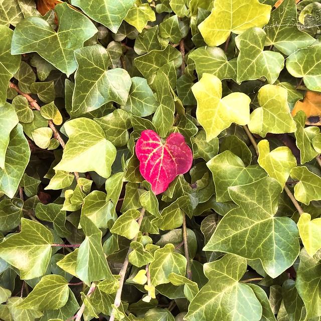 Leaf of love.