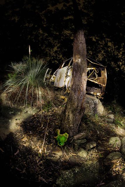 Ghost mushroom adventure || Revesby ||  {Explore 172, 2021/09/04}