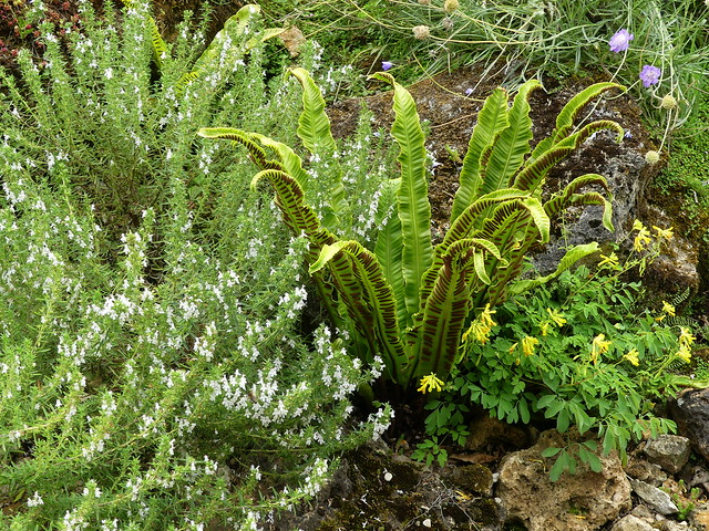 Flore alpine et méditerranéenne