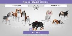 SEmotion Libellune English Beagle Animesh