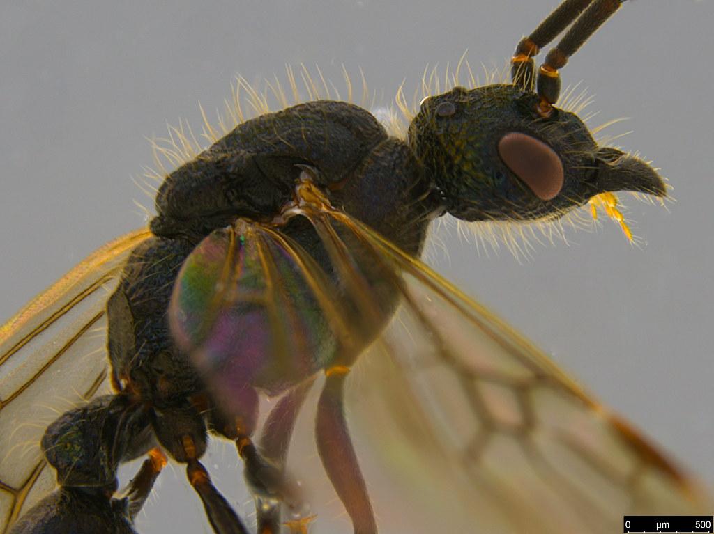 10b - Formicidae sp.