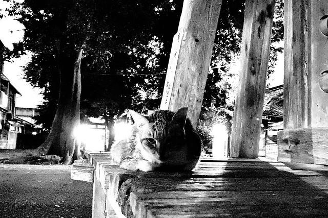 Today's Cat@2021−09−03