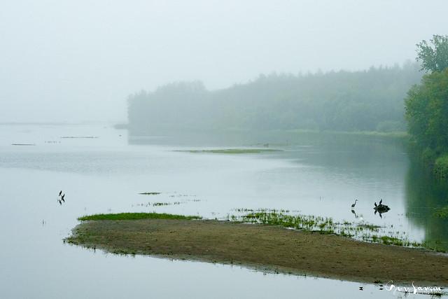 Brouillard de fin d'été