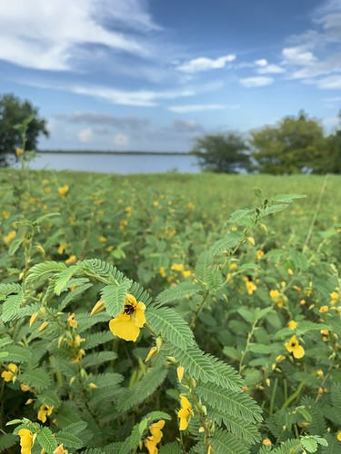 Lake Somerville State Park | August 2021