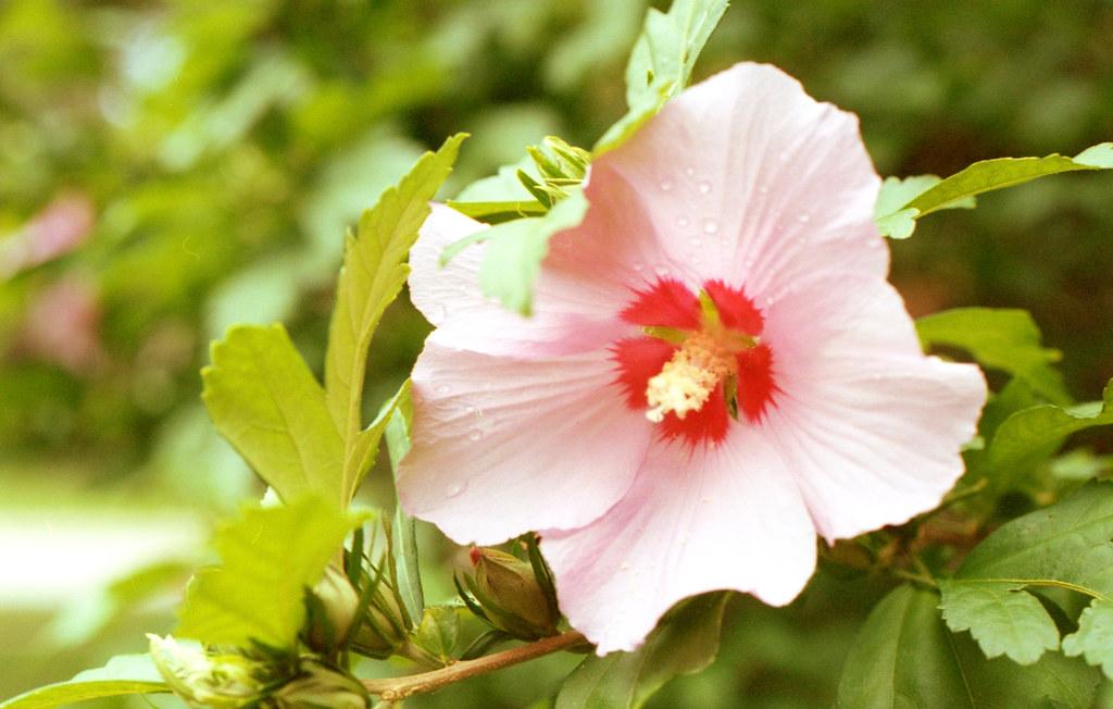 Water on teh Flower