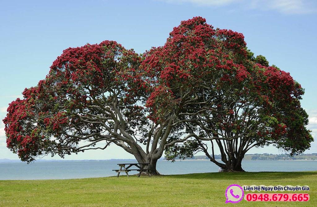 Cảnh đẹp ở New Zealand