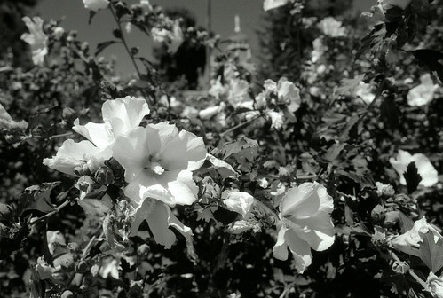 L.A. County Arboretum (44)