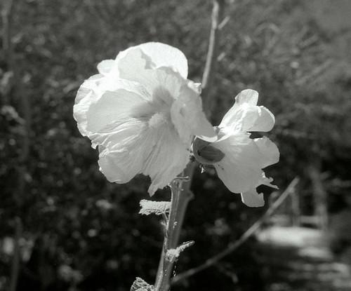 L.A. County Arboretum (39)