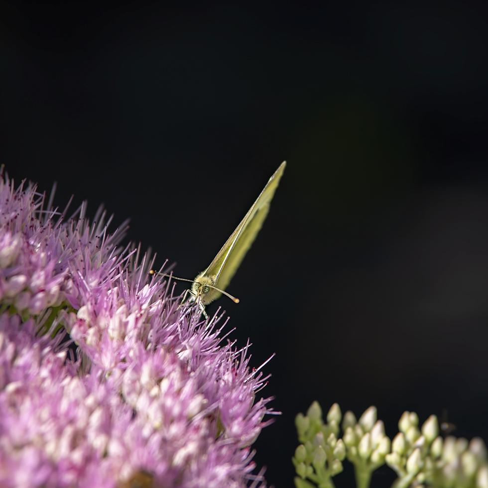Macros/  proxi/  insectes  - Page 37 51423316306_5b3dcdb16e_o