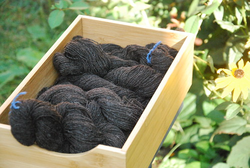 Six twisted skeins of Zwartables wool handspun as 2-ply yarn is laid in a bamboo box.  The yarn is a dark brown-black and is set out in front of a bed of Black Eyed Susan plants.