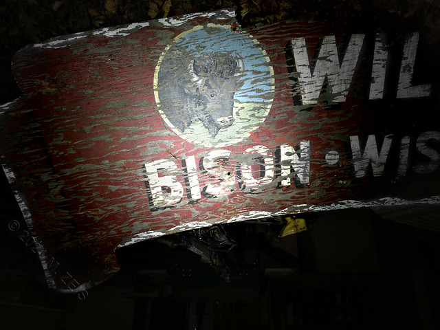 Bison IMG_5046