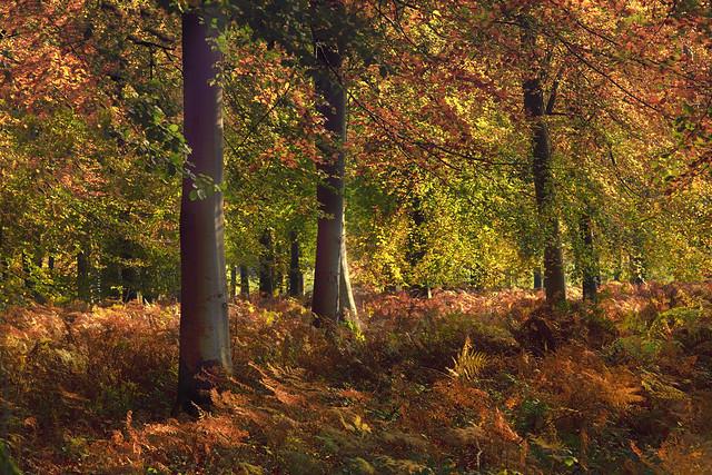Autumns Treasures.