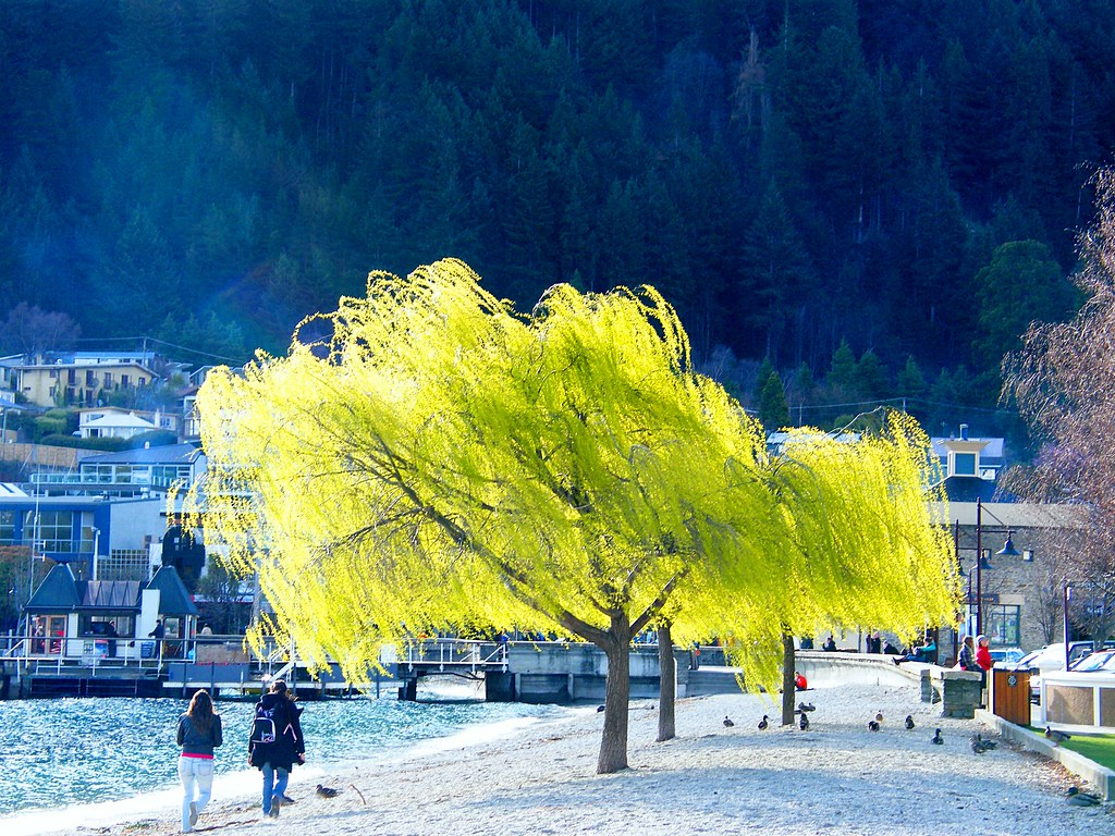 Iridescent Tree