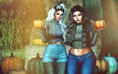 Sweet Chill of Pumpkin