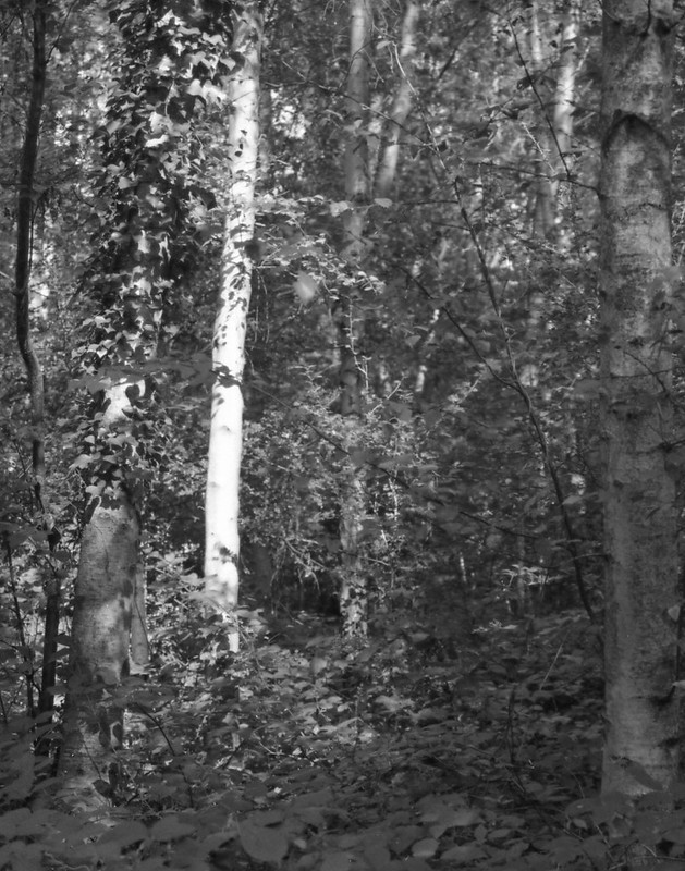 Olympus OM40 Trees B&W