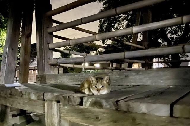 Today's Cat@2021−09−05