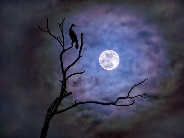 2020 06 21 ar72 er moon2  21 7 22 x CFx2 TAspicxTdnai SaharaDustSunsetKayakTg5-6190098-6190098