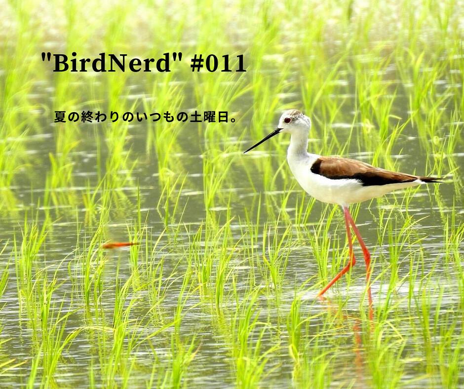 BirdNerds011