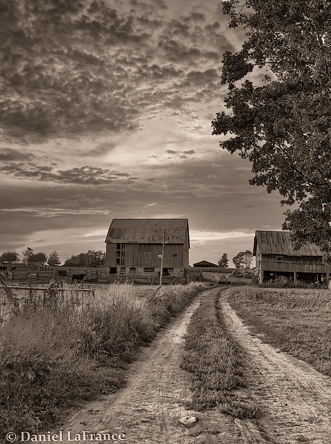 Tractor's Road #3
