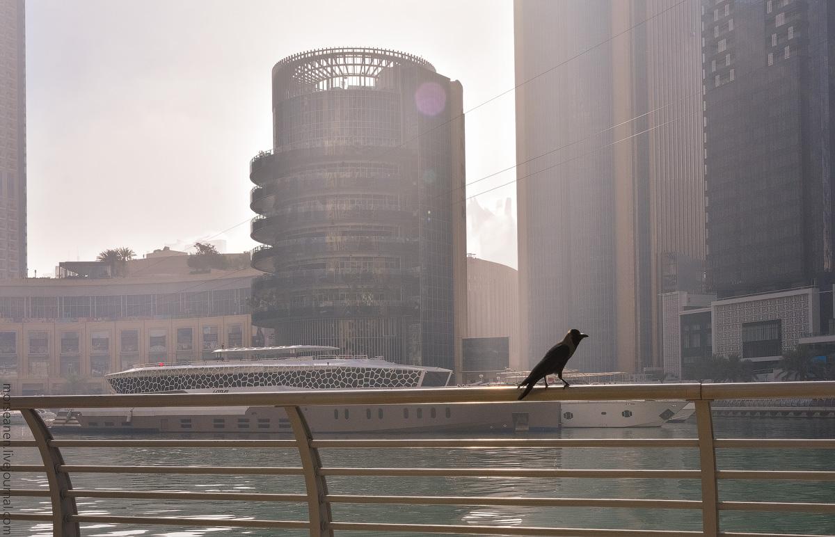 Dubai-Marina-(33)