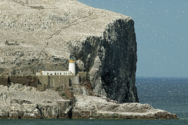 Bass Rock Lighthouse - Firth of Forth.