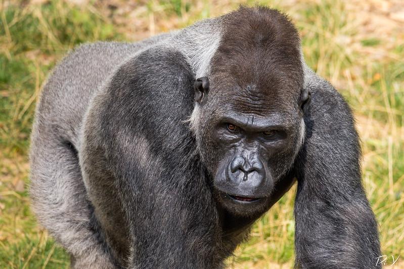 PiX  - Eric Gillard | Gorille