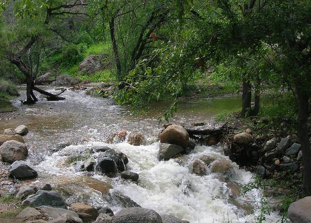 A rejuvenated Madera Creek, monsoon season.
