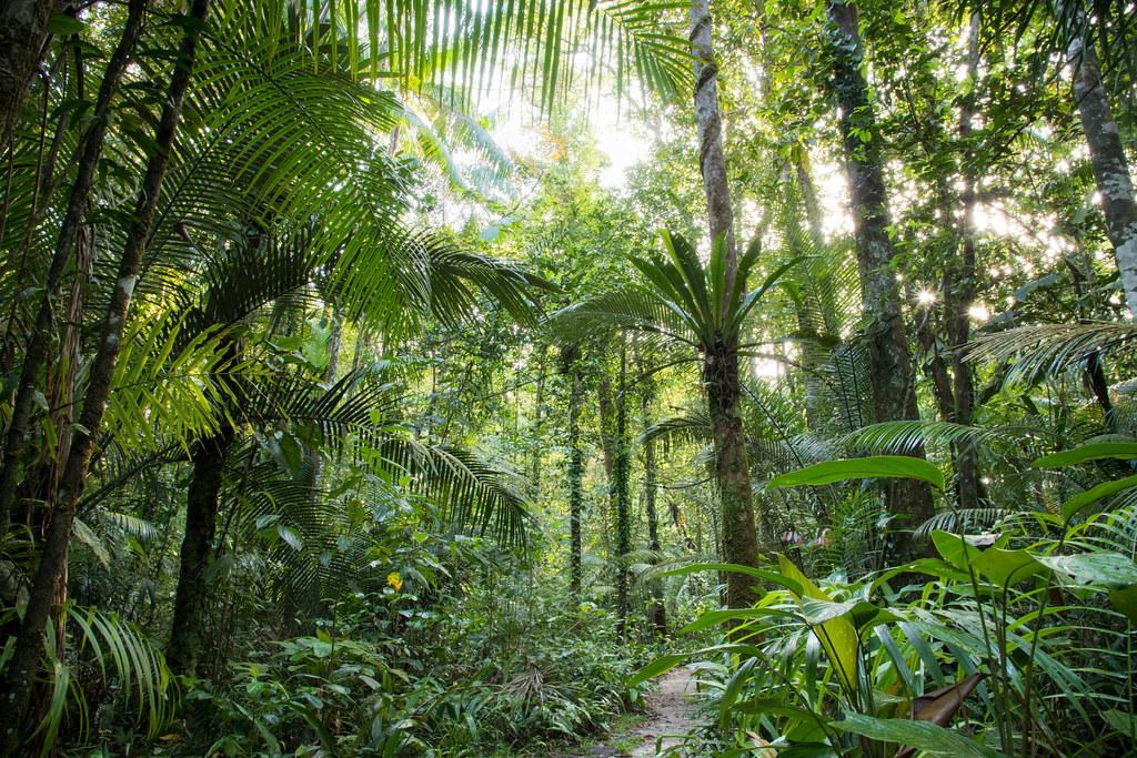 Secondary rainforest - French Guiana