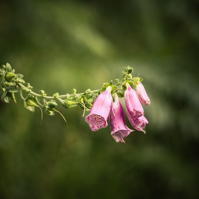 pretty in pink | Little Druim Wood | The Trossachs | Stirlingshire