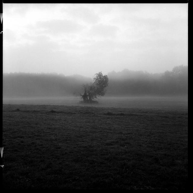 #foggymorning